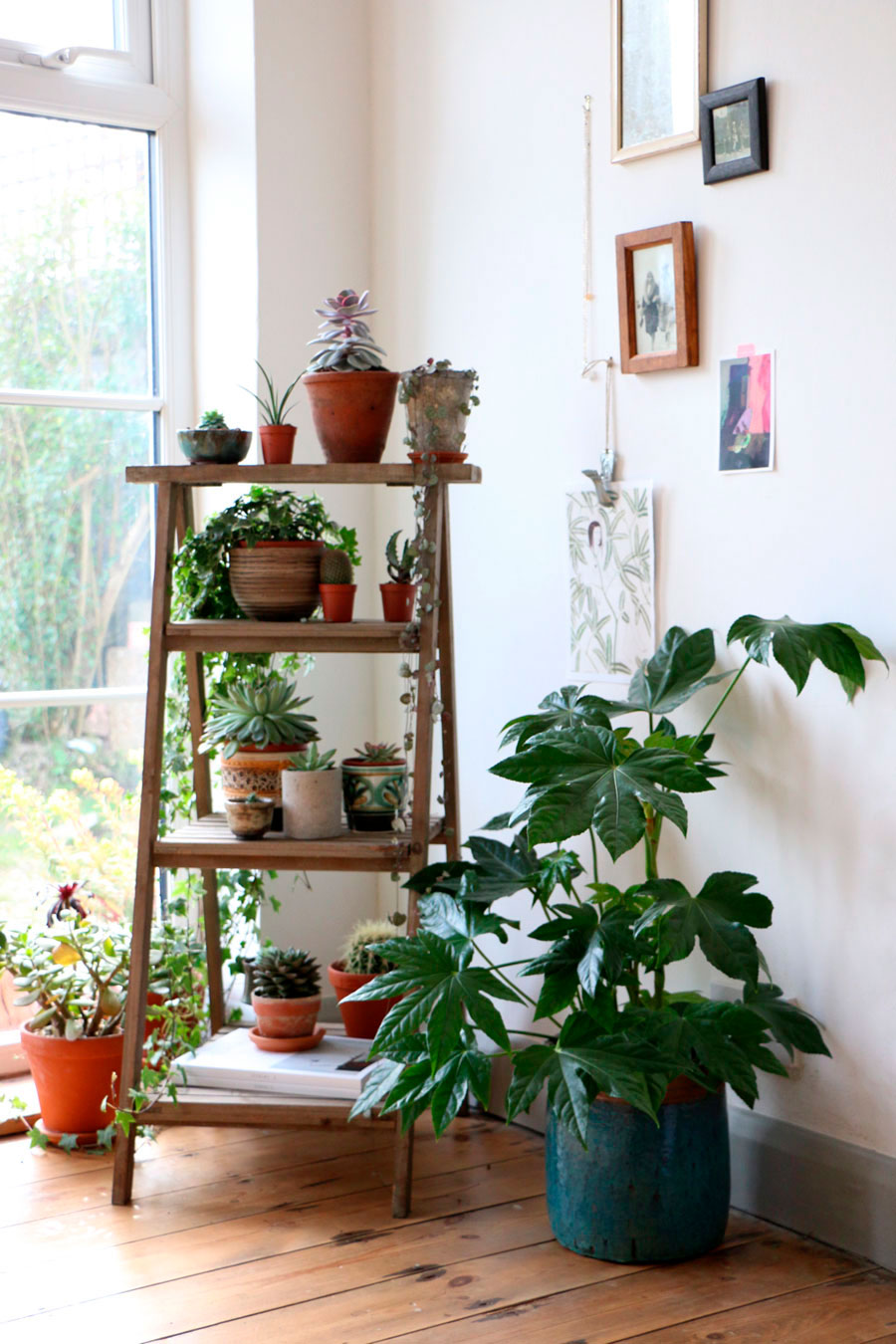 8 ideas para decorar tus esquinas for Decoracion con plantas en living